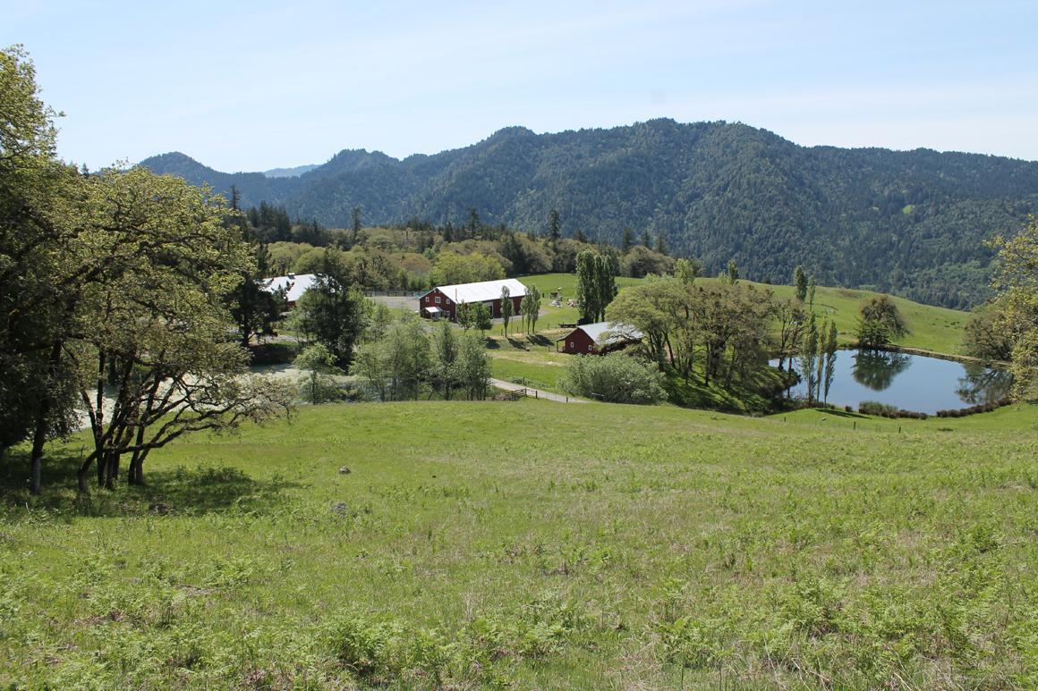 Main house pond and barns