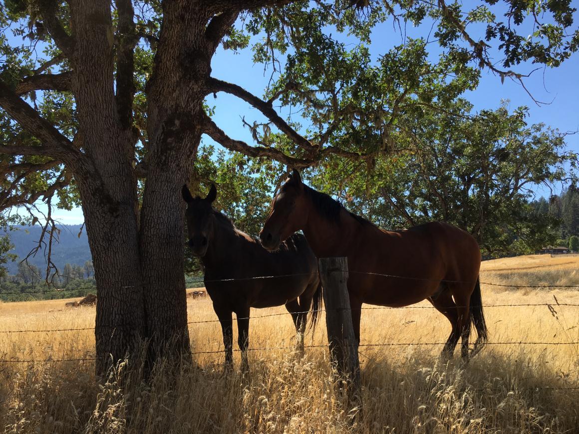 Horses love it here, too