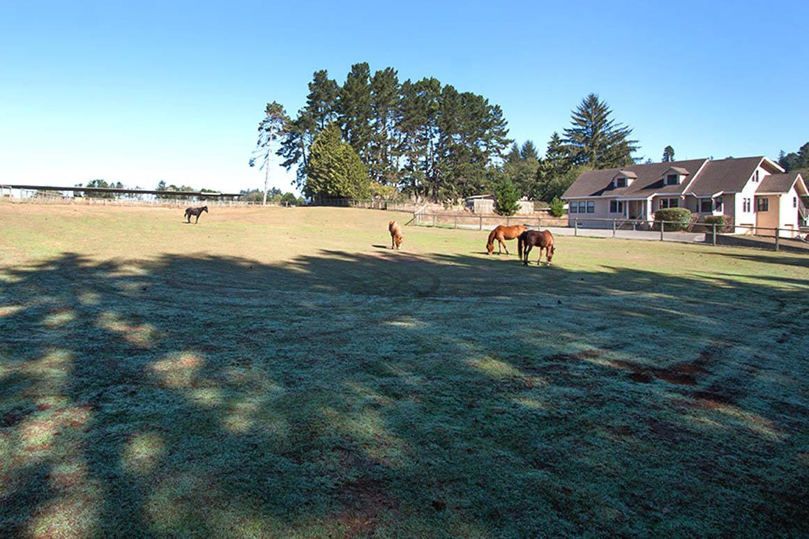 Serene horse pasture facing home