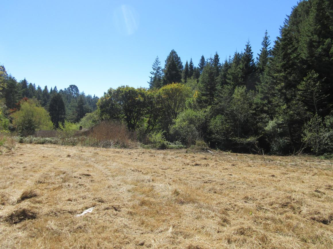 Open grassy area and trees
