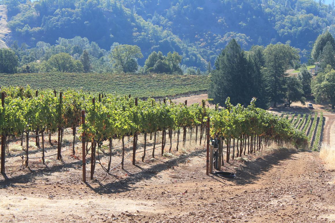 Vineyards and hills