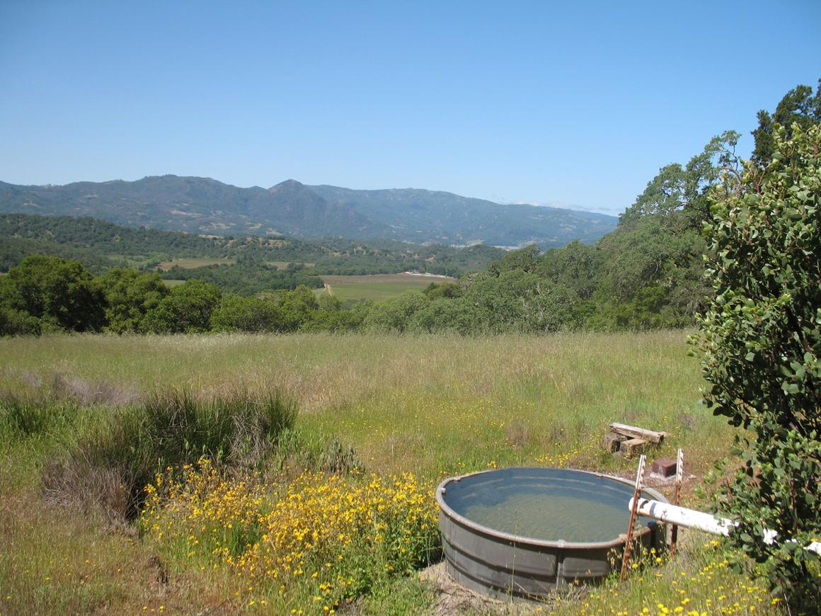 One of the water troughs